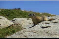 nice-20-sale-marmot